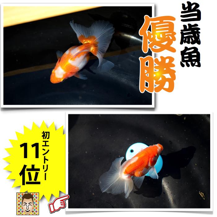 土佐錦品評会2